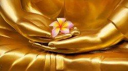 VB-COM-golden-Buddha-flower-mudra_80035756