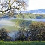 VB-Mist-on-Petaluma-Hills