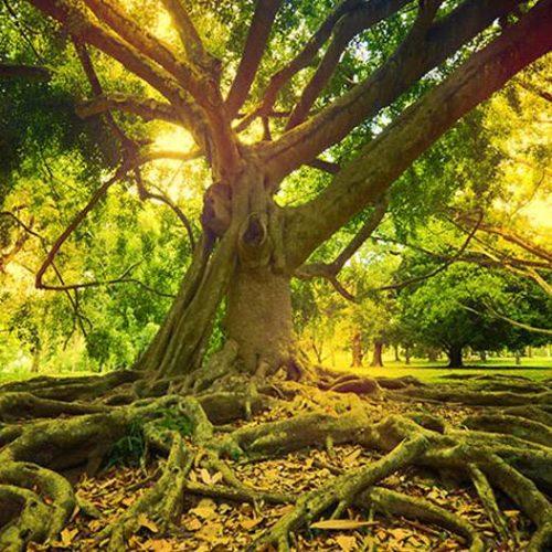 """Boundless Support""- Miranda Macpherson, a Spiritual Teacher, influenced by Ramana Maharshi - Awakening the Love & Wisdom of your True Nature through Audio Meditation, Interfaith Teachings, Holistic Inquiry, Freedom, Meditation , and Defenselessness"
