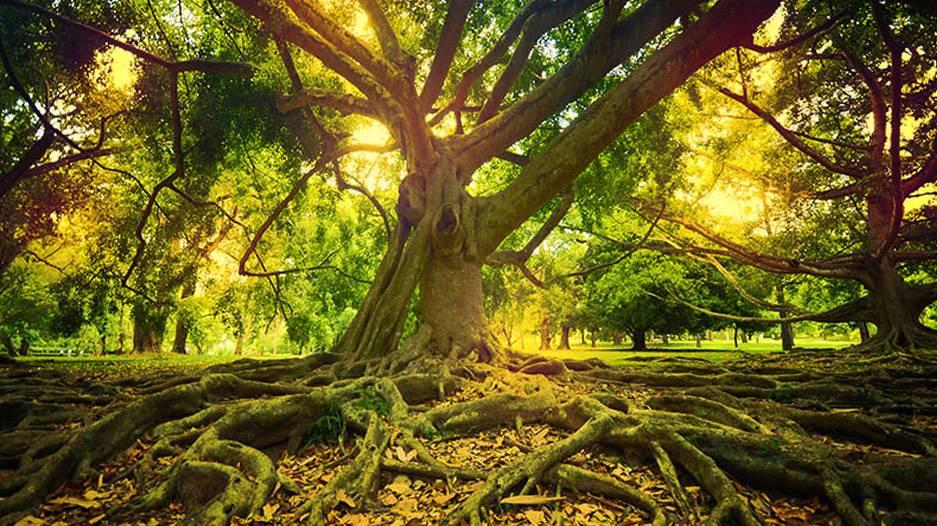 """Undoism – The Practice of Ego Relaxation"""