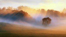 VB-NAT-misty-forest-meadow-landscape_133853174