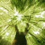 VB-NAT-Home-Tree-Miranda-Macpherson